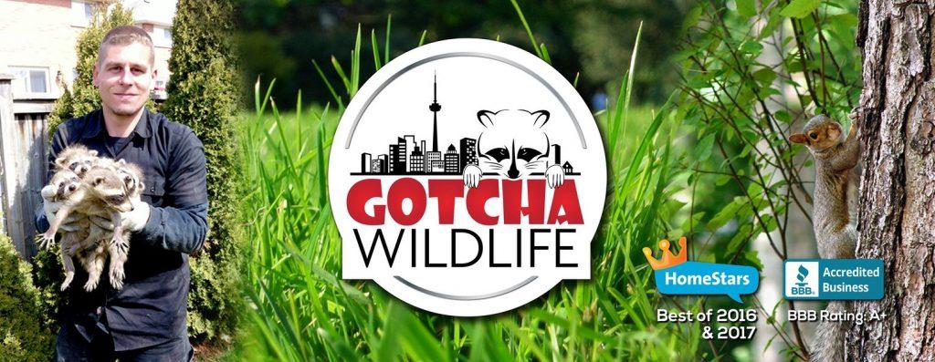 Gotcha-Wildlife