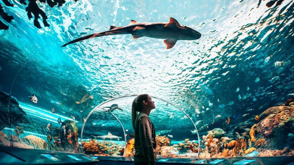 Ripley-Aquarium
