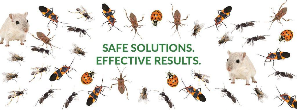 environmental-pest-control